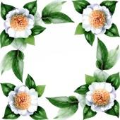 Fotografie Bílé kamélie květiny se zelenými listy izolované na bílém. Ilustrace pozadí akvarelu. Ozdobný rámeček s kopírovacím prostorem.