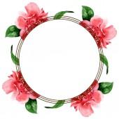 Růžové velbloudé květy se zelenými listy izolované na bílém. Vodný obrázek pozadí-barevný. Orámovaná hranice rámečku s prostorem pro kopírování.