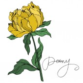 Fotografie Vector peony flower with leaves isolated on white with peony lettering. Purple and green engraved ink art on white background.