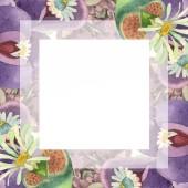 Fotografie Sukulentní květinové botanické květin. Divoký jarní listové wildflower izolován. Sada akvarel pozadí obrázku. Akvarel, samostatný výkresu módní aquarelle. Frame hranice ozdoba náměstí.