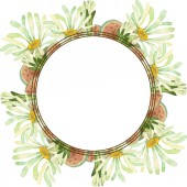 Sukulentní květinové botanické květin. Divoký jarní listové wildflower izolován. Sada akvarel pozadí obrázku. Akvarel, samostatný výkresu módní aquarelle. Frame hranice ozdoba náměstí.
