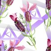 Fialové levandule květinové botanické květy. Vodný obrázek pozadí-barevný. Bezespání vzorek pozadí.