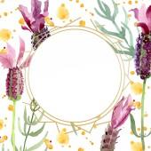 Fialové levandule květinové botanické květy. Vodný obrázek pozadí-barevný. Orámovaná hranatá hranice.