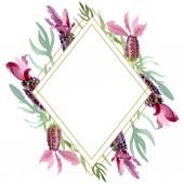 Lila levendula virágos botanikus virágok. Akvarell háttér illusztráció meg. Keretszegély Dísz tér.