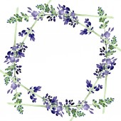 Violet lavender floral botanical flower. Watercolor background illustration set. Frame border ornament square.