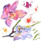 Orchidea virág botanikai virágok. Akvarell háttér illusztráció meg. Izolált orchideák illusztrációs elem.