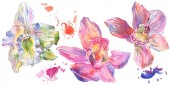 Fotografie Orchid floral botanical flowers. Watercolor background illustration set. Isolated orchids illustration element.