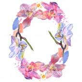 Orchid floral botanical flowers. Watercolor background illustration set. Frame border ornament square.