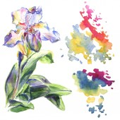 Orchid floral botanical flowers. Watercolor background illustration set. Isolated pattern illustration element.