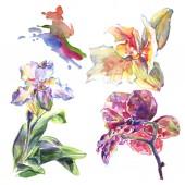 Fotografie Orchid floral botanical flowers. Watercolor background illustration set. Isolated pattern illustration element.