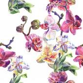Květinové botanické květiny. Vodný obrázek pozadí-barevný. Bezespání vzorek pozadí.