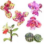 Orchidea virág botanikus virág. Akvarell háttér illusztráció meg. Izolált orchideák illusztrációs elem.