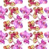 Fényképek Orchidea virág botanikus virág. Akvarell háttér illusztráció meg. Folytonos háttérmintázat.