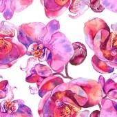 Orchidea virág botanikus virág. Akvarell háttér illusztráció meg. Folytonos háttérmintázat.