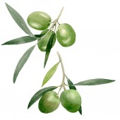 Photo Olive branch with black and green fruit. Watercolor background illustration set. Isolated olives illustration element.