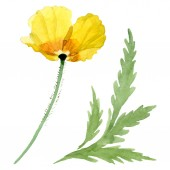 Yellow poppy floral botanical flowers. Watercolor background illustration set. Isolated poppies illustration element.