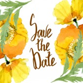 Fényképek Sárga pipacs virágos botanikai virágok. Akvarell háttér illusztráció meg. Keretszegély Dísz tér.