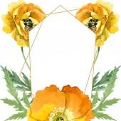 Sárga pipacs virágos botanikai virágok. Akvarell háttér illusztráció meg. Keretszegély Dísz tér.