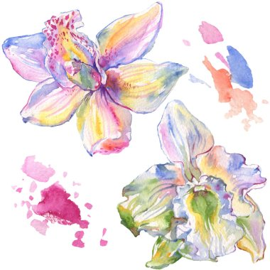 Orchid floral botanical flowers. Wild spring leaf wildflower isolated. Watercolor background illustration set. Watercolour drawing fashion aquarelle isolated. Isolated orchids illustration element. stock vector