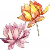 Květinové botanické květiny. nastavení ilustrace pozadí. Izolovaný prvek pro Nelumbo obrázek.