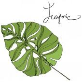 Fotografie Palm beach tree leaves jungle botanical. Black and green engraved ink art. Isolated leaf illustration element.