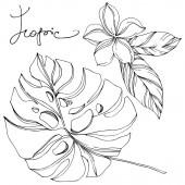 Palm Beach fa elhagyja dzsungel botanikai Succulent. Fekete-fehér vésett tinta Art. Izolált levél illusztrációs elem.