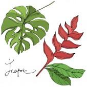 Palm Beach fa elhagyja dzsungel botanikus. Fekete és zöld gravírozott tinta művészet. Izolált levél illusztrációs elem.