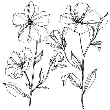 Vector Flax floral botanical flowers. Wild spring leaf wildflower isolated. Black and white engraved ink art. Isolated flax illustration element on white background. stock vector