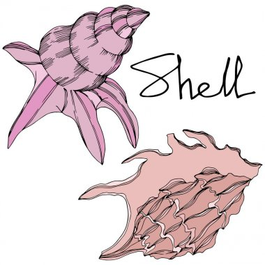 Vector Summer beach seashell tropical elements. Black and white engraved ink art. Isolated shell illustration element on white background. clip art vector