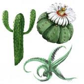 Fotografie Zelený kaktus květinové botanické květy. Vodný obrázek pozadí-barevný. Samostatný příklad kaktusů.