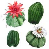 Photo Green cactus floral botanical flower. Watercolor background illustration set. Isolated cacti illustration element.