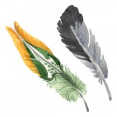 Watercolor bird feather from wing isolated. Aquarelle feather for background. Isolated feather illustration element.