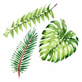 Palm beach tree leaves jungle botanical. Watercolor background illustration set. Isolated leaf illustration element.