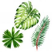 Palme Strand Blätter Dschungel botanischen. Aquarell Hintergrundillustration Set. isoliertes Blattillustrationselement.