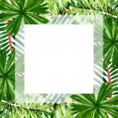 Palm Beach fa elhagyja dzsungel botanikus. Akvarell háttér illusztráció meg. Keretszegély Dísz tér.