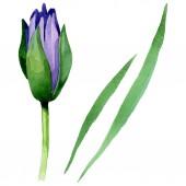 Blue lotus floral botanical flowers. Watercolor background illustration set. Isolated nelumbo illustration element.