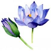 Kék lótusz virágos botanikai virágok. Akvarell háttér illusztráció meg. Elszigetelt Nelumbo illusztráció elem.