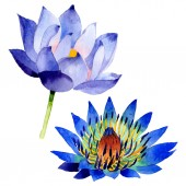 Fotografie Modrý Lotos květinové botanické květy. Vodný obrázek pozadí-barevný. Izolovaný prvek pro Nelumbo obrázek.