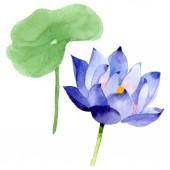Modrý Lotos květinové botanické květy. Vodný obrázek pozadí-barevný. Izolovaný prvek pro Nelumbo obrázek.