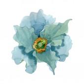 Fényképek Kék virágos botanikai mákgubóból. Akvarell háttér illusztráció készlet. Elszigetelt Pipacsok ábra elem.