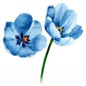 Blue tulip floral botanical flowers. Watercolor background illustration set. Isolated tulip illustration element.