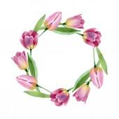 Pink tulipánok virágos botanikai virágok. Akvarell háttér illusztráció meg. Keretszegély Dísz tér.