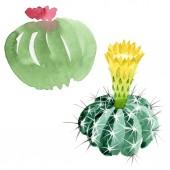 Fotografie Zelené kaktus květinové botanické květy. Vodný obrázek pozadí-barevný. Samostatný příklad kaktusů.
