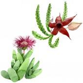 Zöld kaktusz virágos botanikus virág. Akvarell háttér illusztráció meg. Izolált kaktuszok, illusztrációs elem.