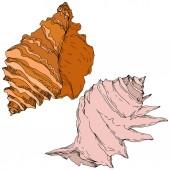 Sommer Strand Muschel tropischen Elementen. Schwarz-weiß gestochene Tuschekunst. Isolierte Granaten illustrieren Element.