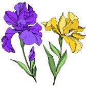 Photo Iris floral botanical flowers. Black and white engraved ink art. Isolated irises illustration element.