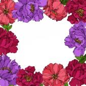 Bazsarózsa virágos botanikus virágok. Vad tavaszi levél vadvirág. Gravírozott tinta művészet. Keretszegély Dísz tér.
