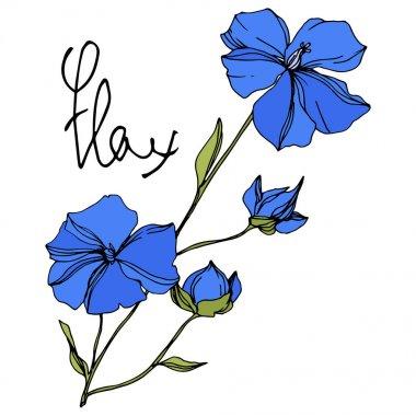 Vektör Keten çiçek botanik çiçekler. Mavi ve yeşil oyulmuş mürekkep sanatı. İzole keten illüstrasyon elemanı.