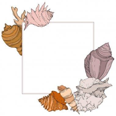 Summer beach seashell tropical elements. Black and white engraved ink art. Frame border ornament square on white backgroud. stock vector
