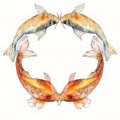 Aquarell aquatische Unterwasser-tropische Fische Set. Rotes Meer und exotische Fische darin: Goldfische. Rahmenrandquadrat.